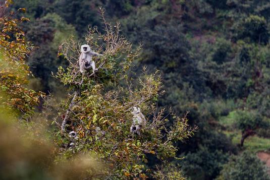 singes Tamang Heritage Trail